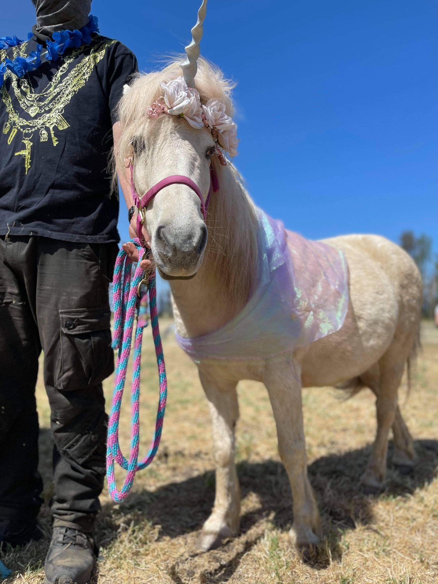 missy-unicorn-2